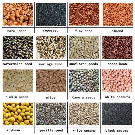 oilseeds can be processed by commercial oil press