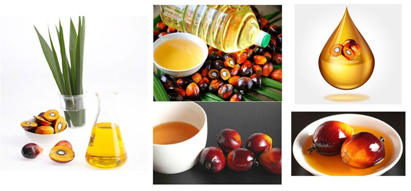 palm kernel oil application
