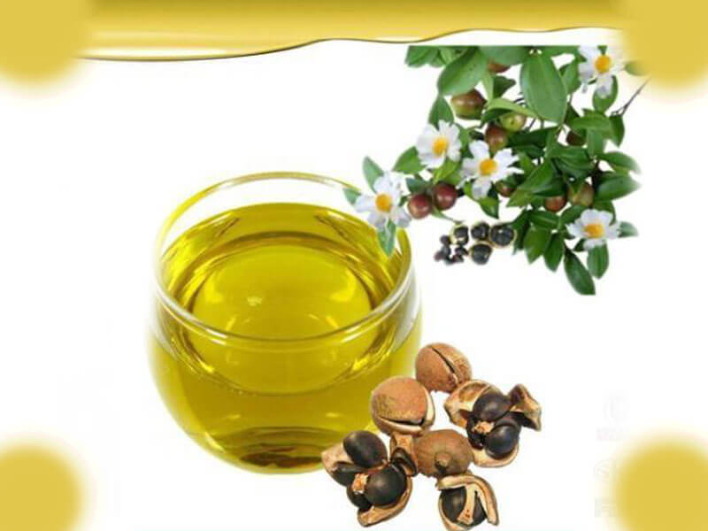 Benefits Of Camellia Oil As Edible Oil Camellia Oil Benefits For Skin Hair Industrial Use