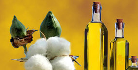 edible cotton seeds oil